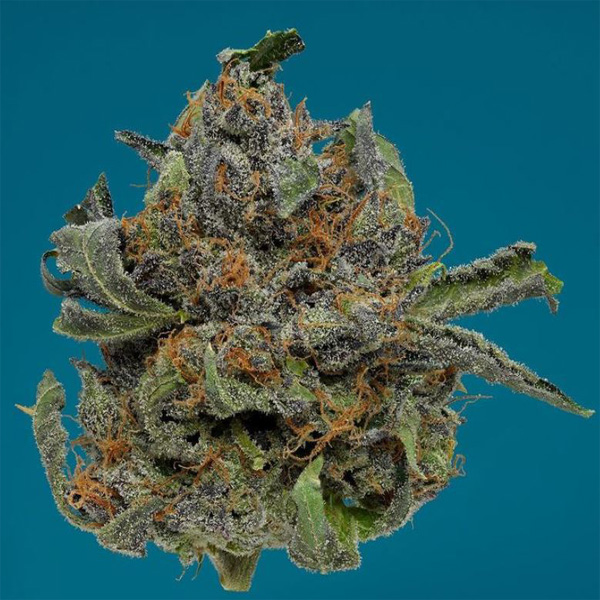 Best weed for Sale